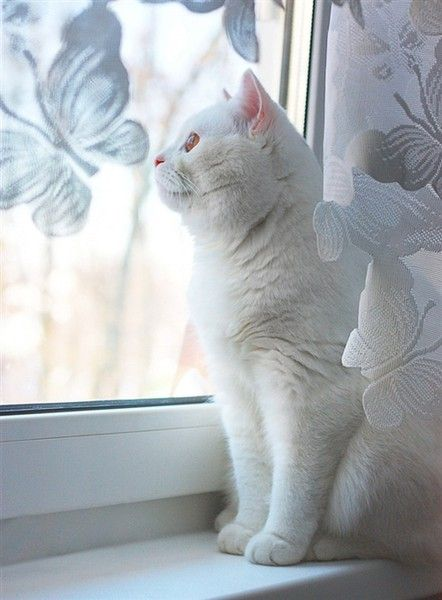White cat, white butterfly window.