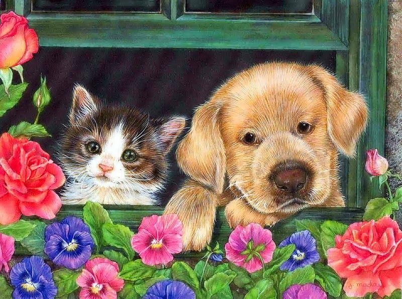 Картинка приколы, открытки кошки собаки