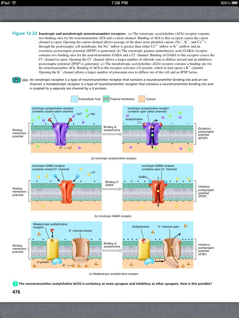 Principles of Anatomy and Physiology, Chapter 12, Nervous Tissue, 30 ...
