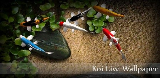 Koi Live Wallpaper Apk Colorful Fish And Interactive Water Watch Koi Happily Explore Their Pond Free Live Wallpapers Live Wallpapers Live Fish Wallpaper