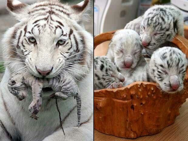 Motherhood. . The greatest gift.. 831