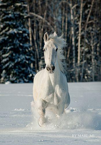 ocean in winter pferde pinterest pferde pferde. Black Bedroom Furniture Sets. Home Design Ideas