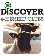 Discover 4-H Sheep Clubs