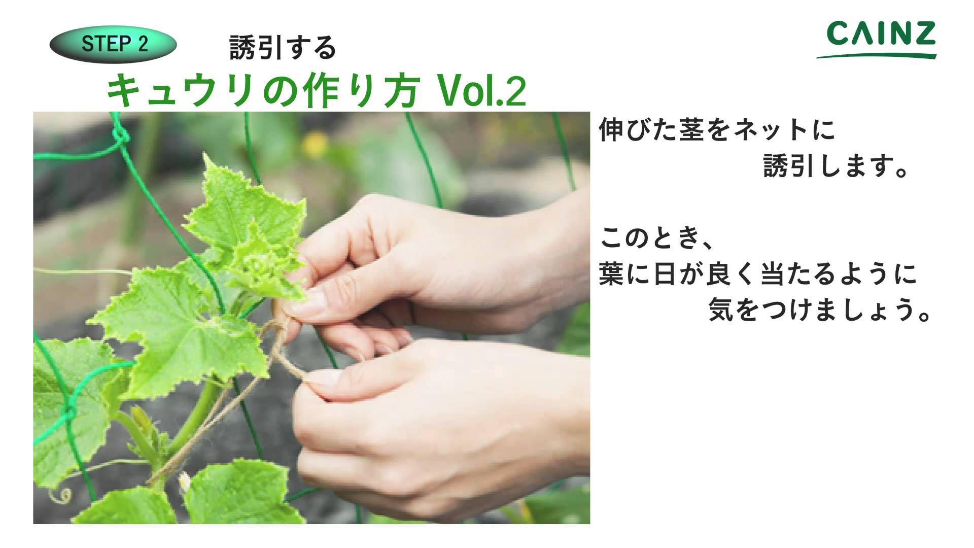 カインズhowto キュウリの育て方 Vol 2 キュウリ 家庭菜園 きゅうり