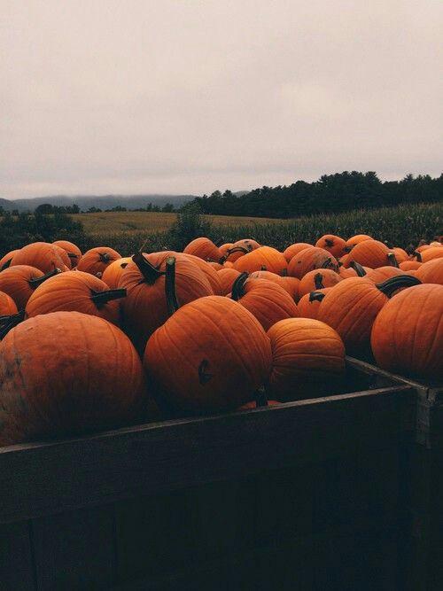 M O O N L I G H T V I B E S Fall Wallpaper Iphone Wallpaper Fall Pumpkin Wallpaper