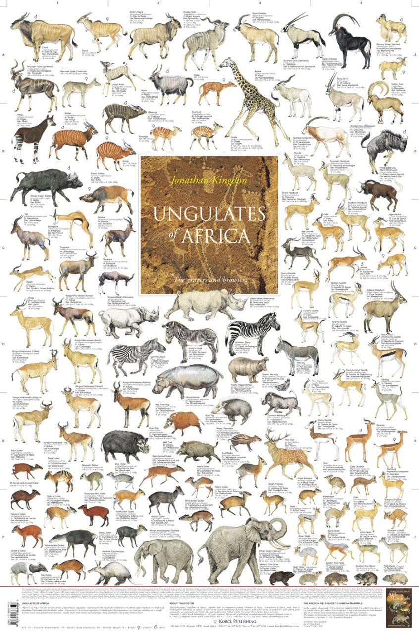 Ungulates of Africa Poster The Grazers and Browsers