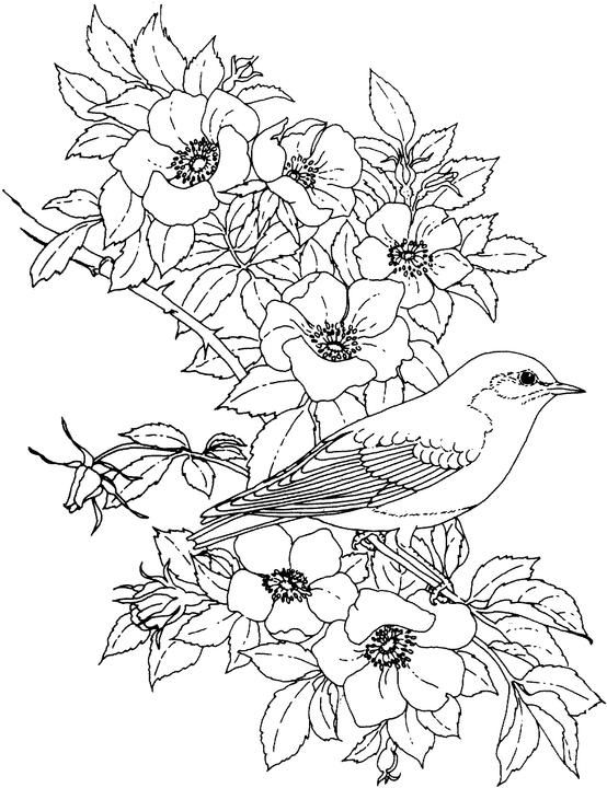 Flower Coloring Page Bird Coloring Pages