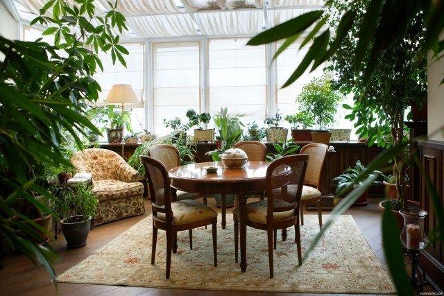 pflanzenpflege wintergarten ideen teppich essmöbel holz licht | Home ...
