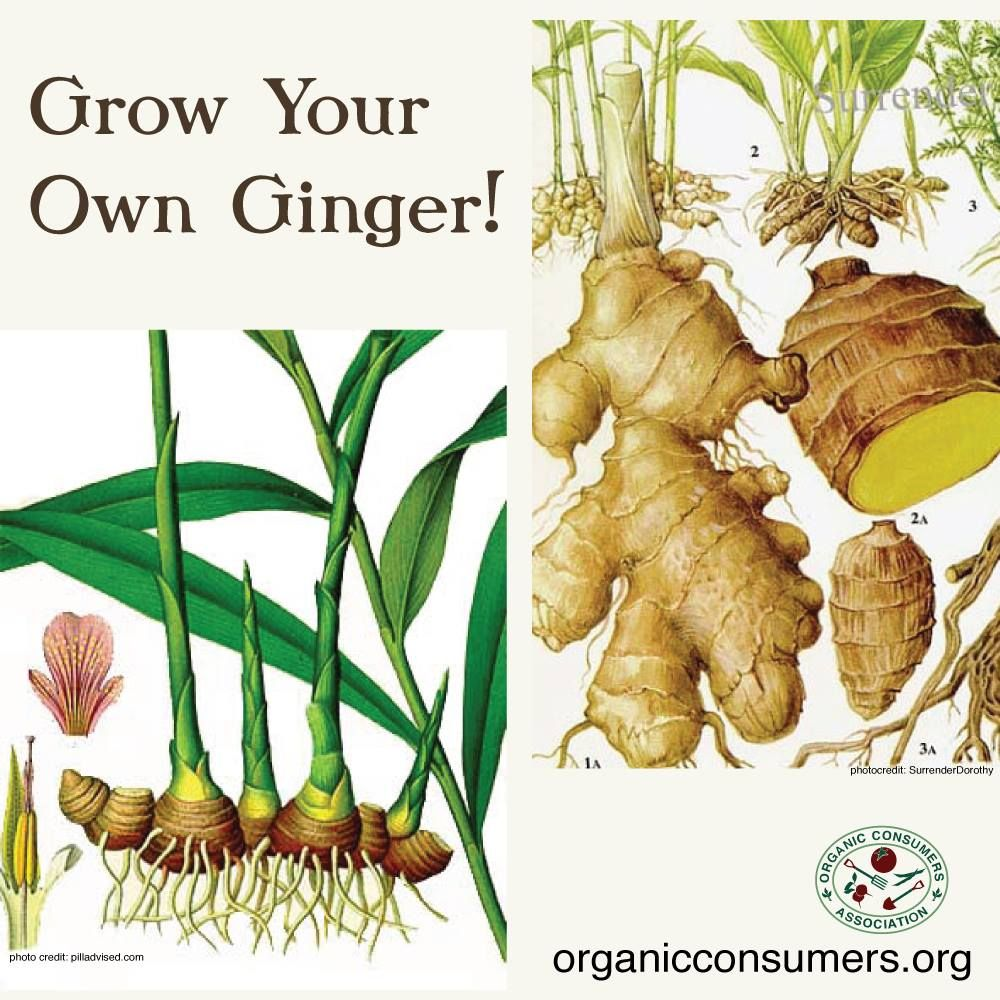 Creating Our First Vegetable Garden Advice Please: Pin By Organic Consumers Association On Gardening