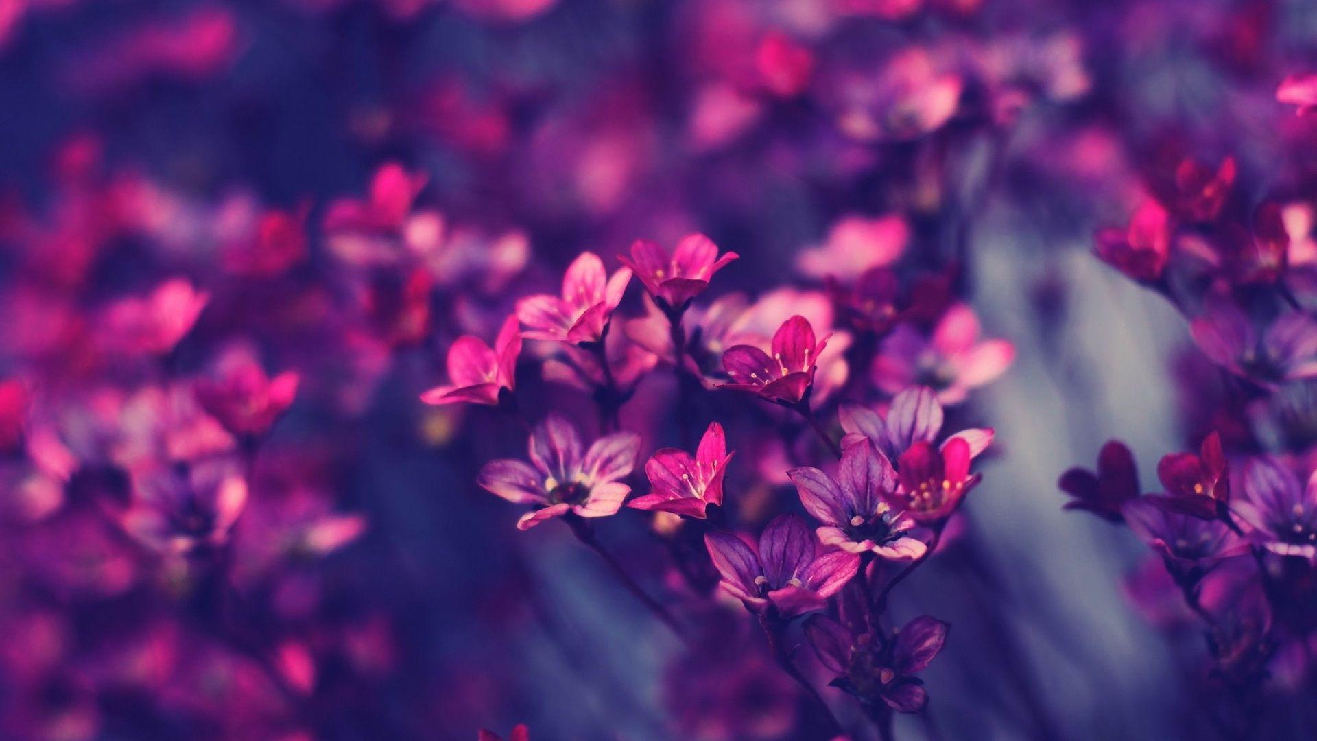 Purple flowers flowersnstuff pinterest flower