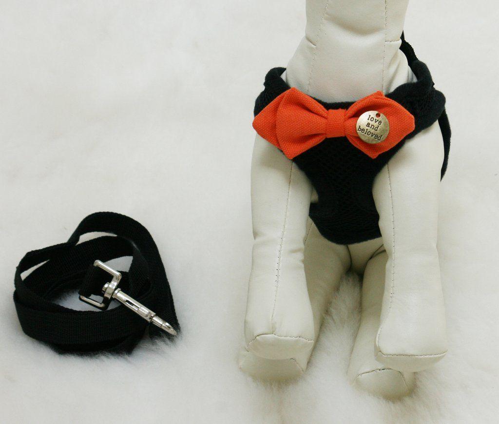 Black Dog Harness with orange bow and a black leash | Wedding ...