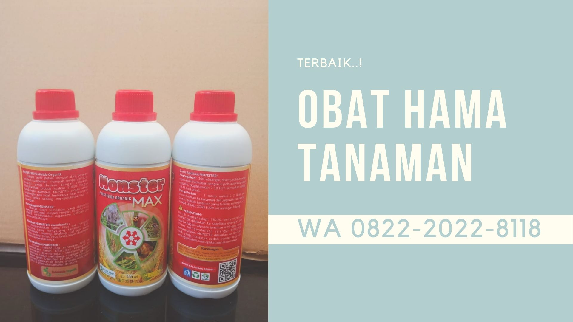 Alami Hp Wa 082 220 228 118 Amanah Obat Hama Wereng Yang Ampuh Di Yogyakarta Nyamuk Wereng Tanaman