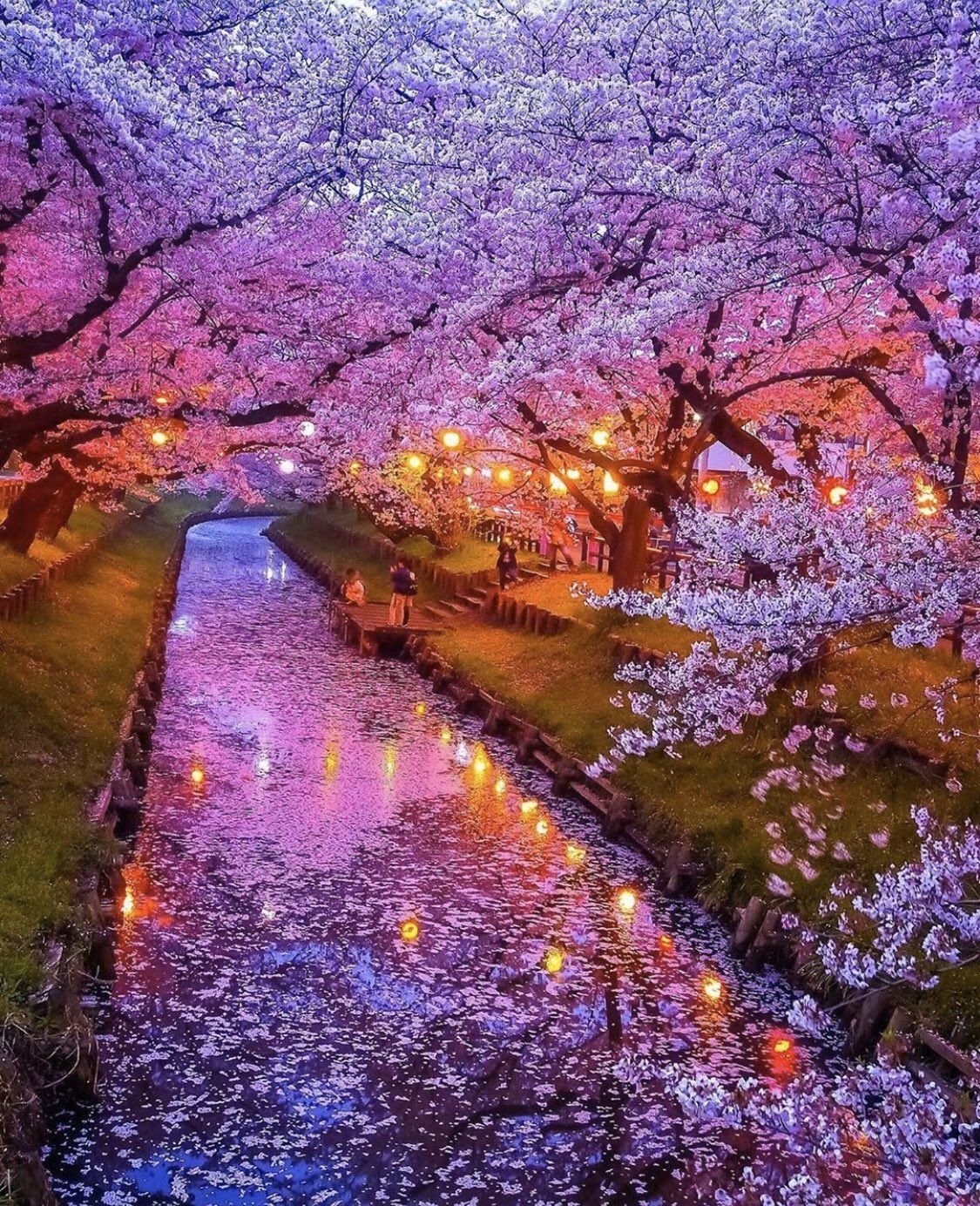Earth On Twitter Cherry Blossom Japan Nature Photography Scenery