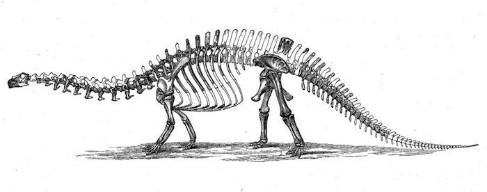 Tuvo que pasar más de un siglo para que el brontosaurio recuperara su categoría. Foto: Wikimedia Commons