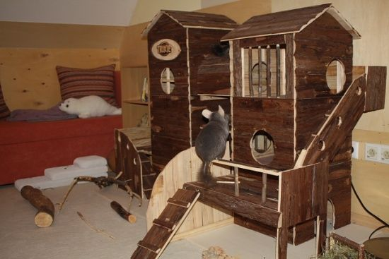 Awesome Chinchilla Playroom Setup The Huge Wooden House Is
