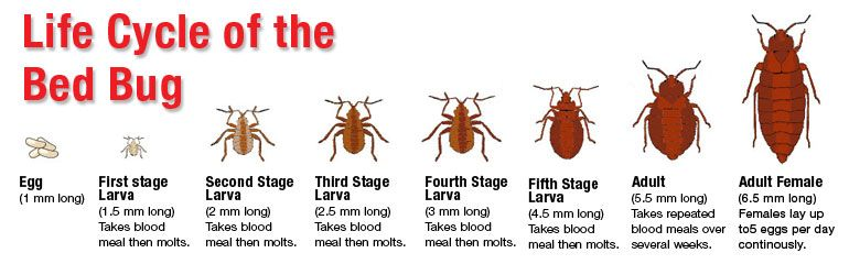 Pin By Pest Control On Bed Bugs With Images Bed Bugs Bugs