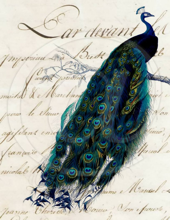 French Script Peacock 8.5x11 Digital Collage Sheet - handmade greeting cards printable art paper supplies - U Print