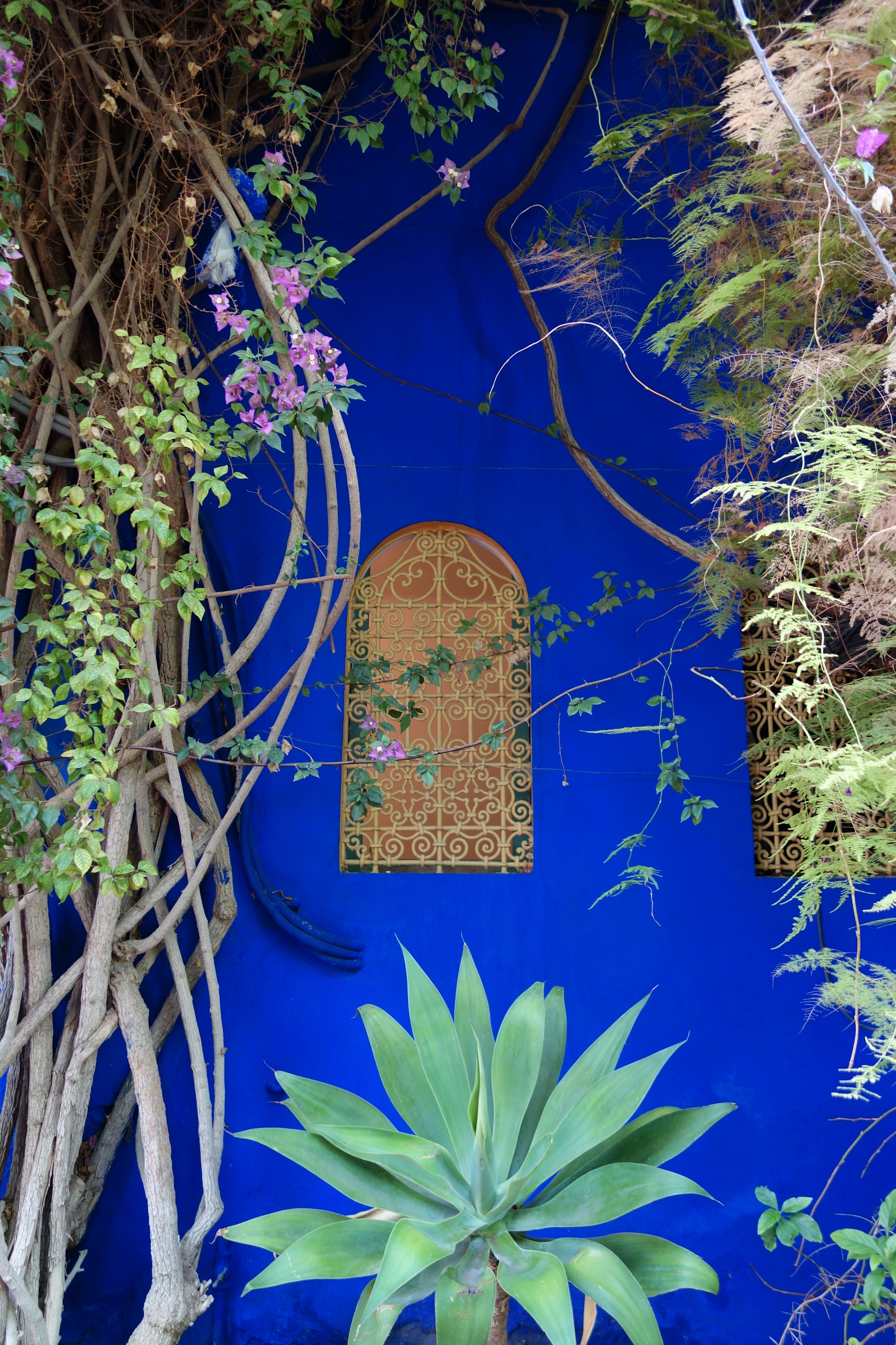 Jardin Majorelle YSL Marrakech photo: psreadme.com