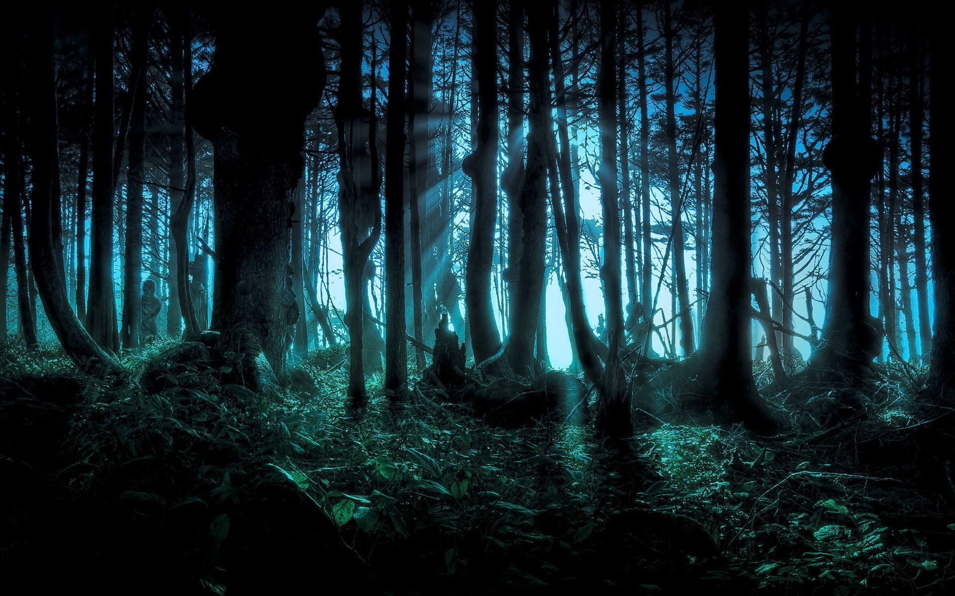 Fantasy Forest Widescreen Wallpaper High Resolution Wallpaper ...