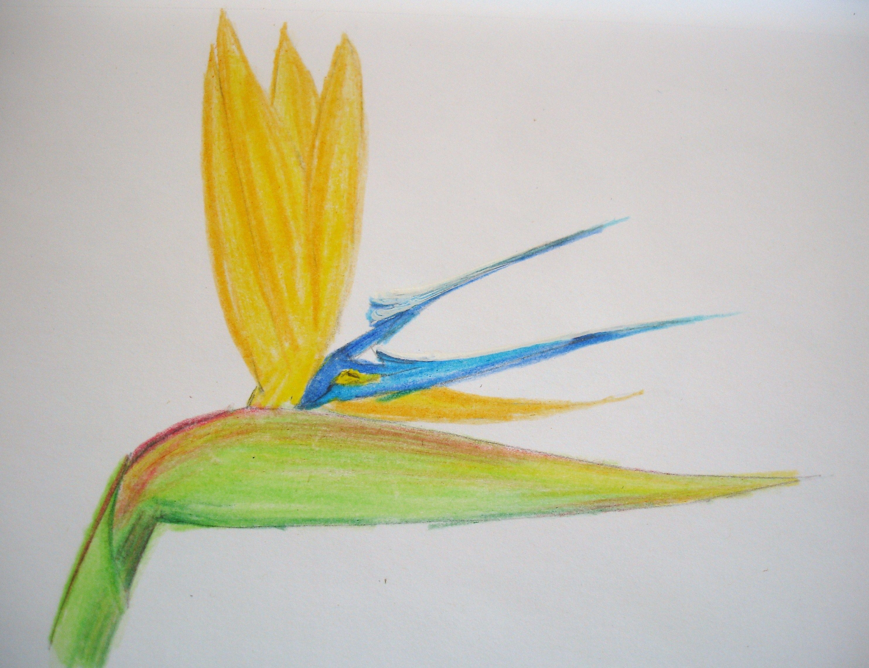 How To Draw Hawaiian Flowers Step By Step Ehow Uk Drawings