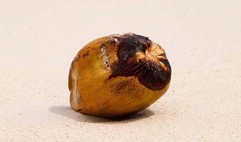 Axilas claras con aceite de coco - Trucos de belleza caseros