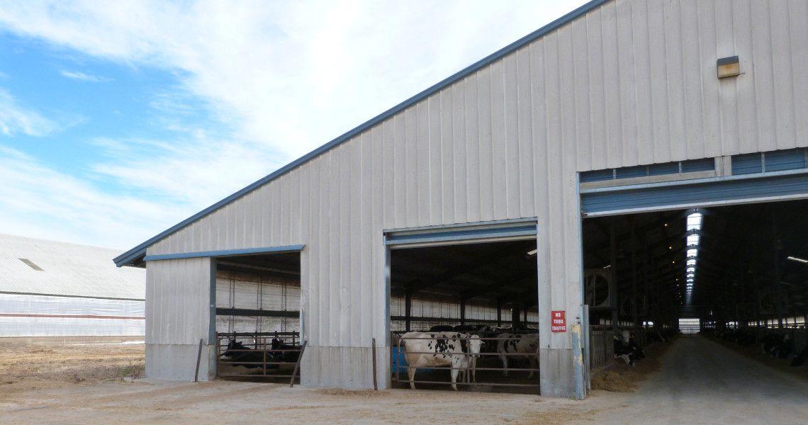 Steel Dairy Barn In 2020 Steel Buildings Building Agricultural Buildings