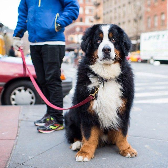 The Dogist Leuke Honden Honden Dieren