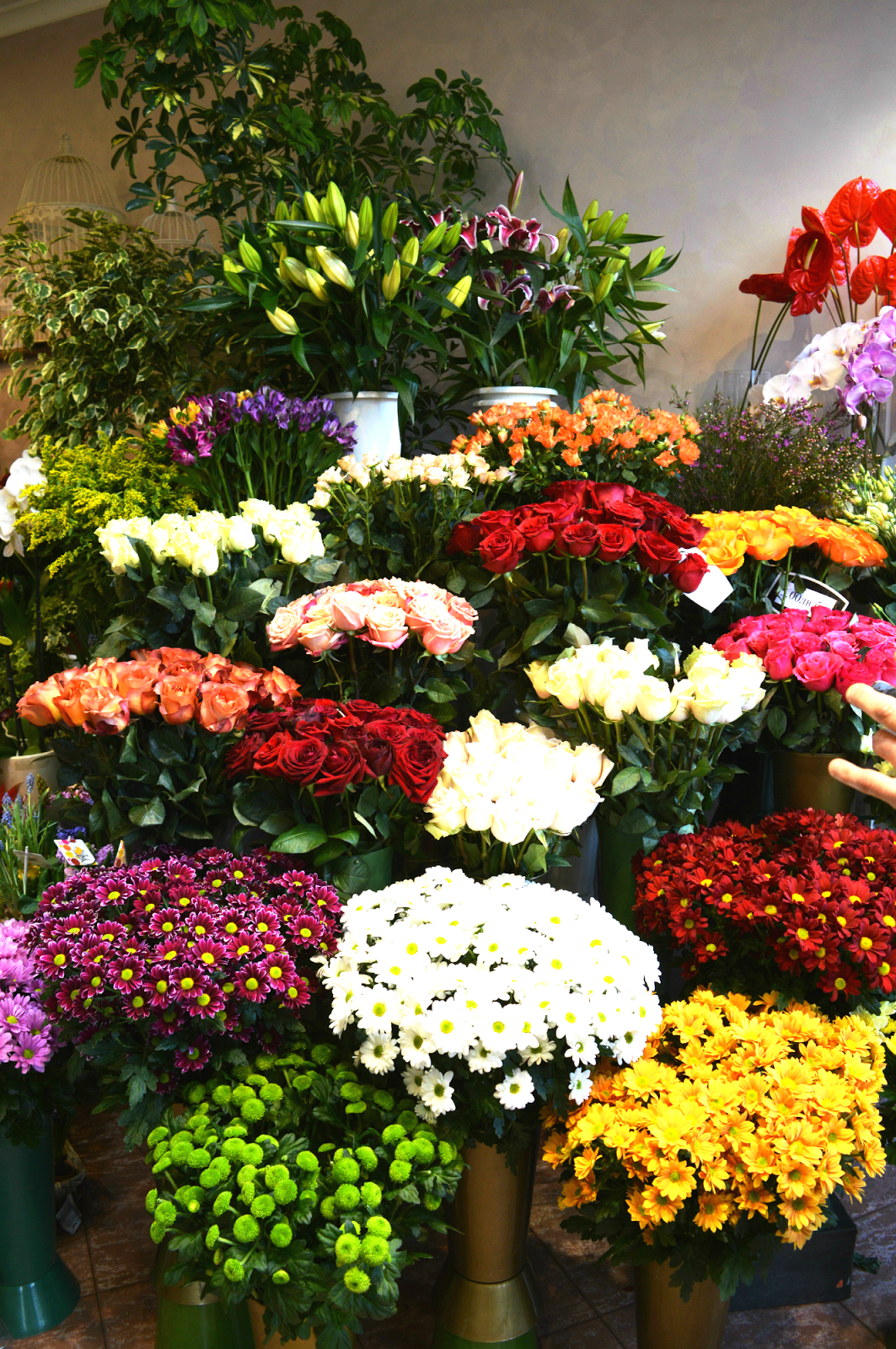 Flower shop in Sofia, Bulgaria