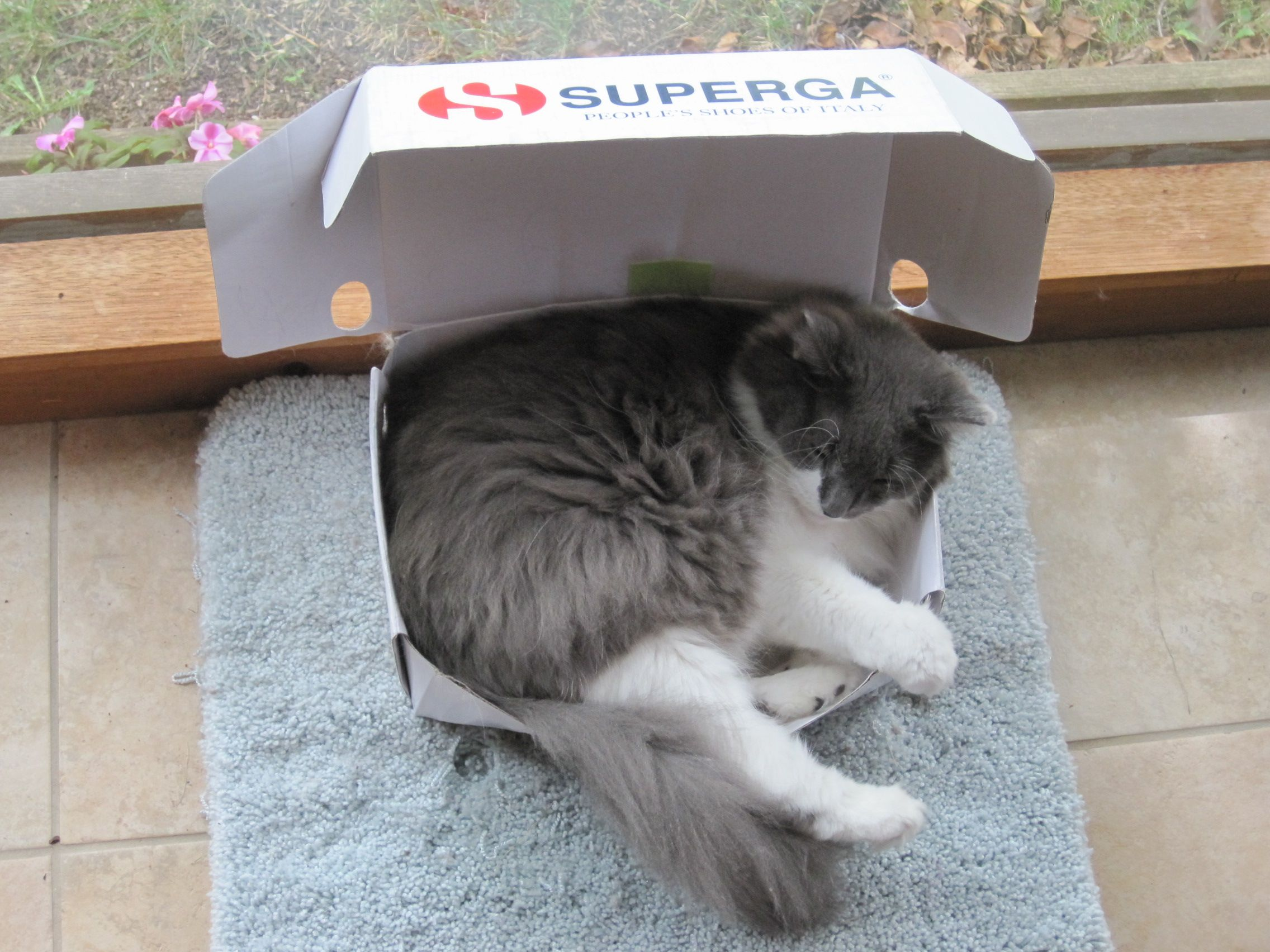 Darn these foreign shoe boxesl!