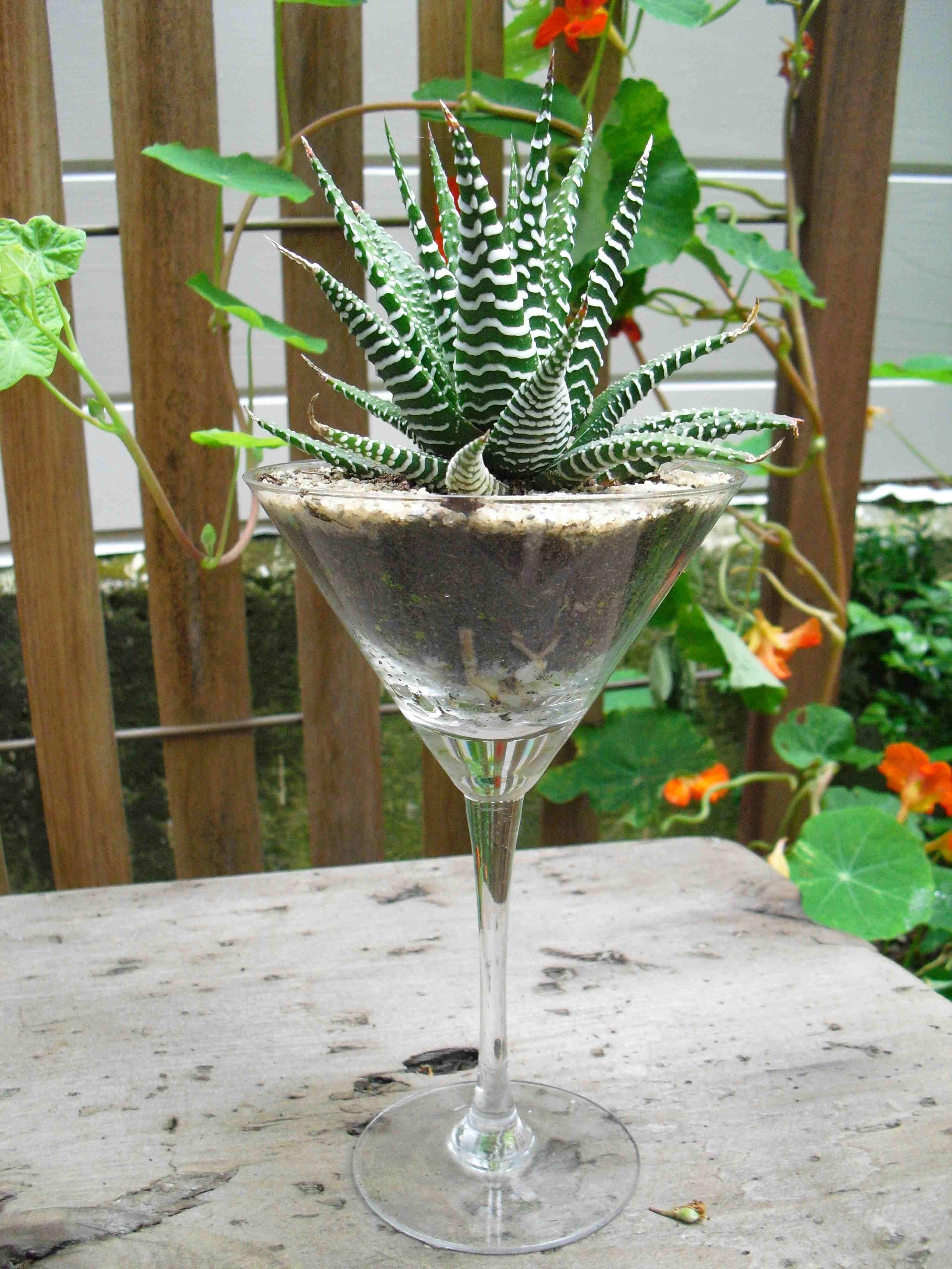 Succulent Martini Terrarium Hanging