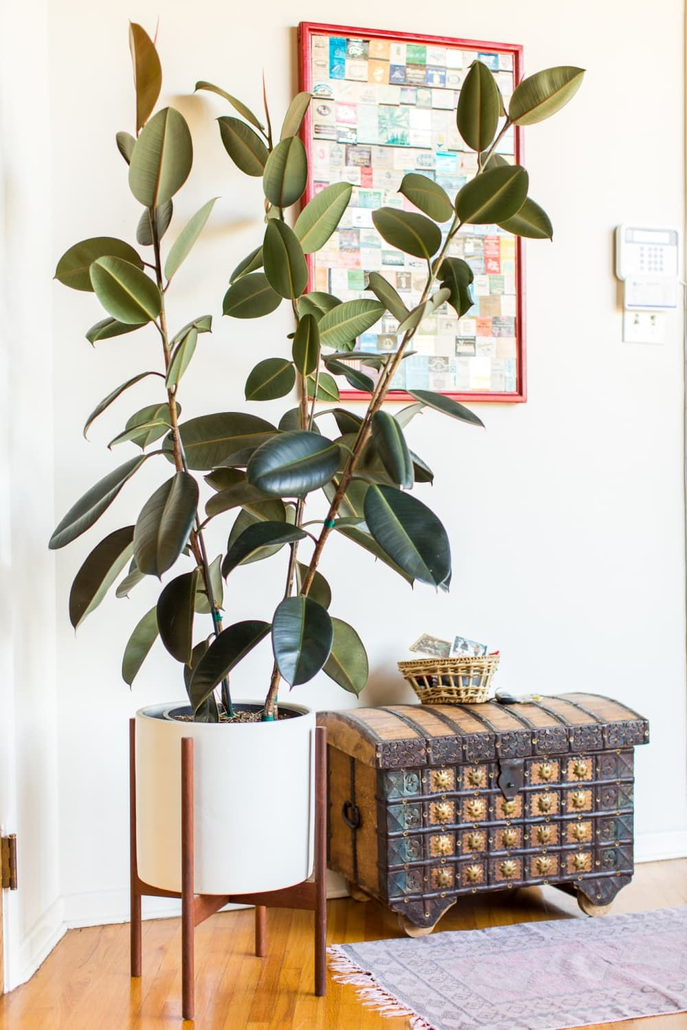 Indoor Trees for Green Thumbs, Beginners, and Every Plant Parent in Between is part of Plant decor indoor, Large indoor plants, Plant decor, House plants indoor, House plants, Big indoor plants - When it comes to making a bold statement, not much can beat an indoor tree  While we'll always love our small houseplants, mini herb gardens, and adorably tiny succulents, there's something so unique and out of the ordinary about having a tree under your roof  Plants are figuratively and literally the breath of fresh air we need in our homes after a long day, and they happen to look really chic while doing it