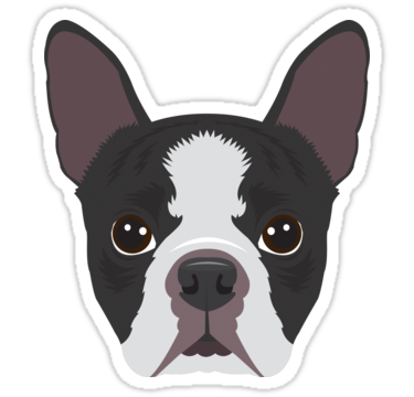 Boston Terrier Sticker By Threeblackdots In 2021 Boston Terrier Illustration Boston Terrier Boston Terrier Gift