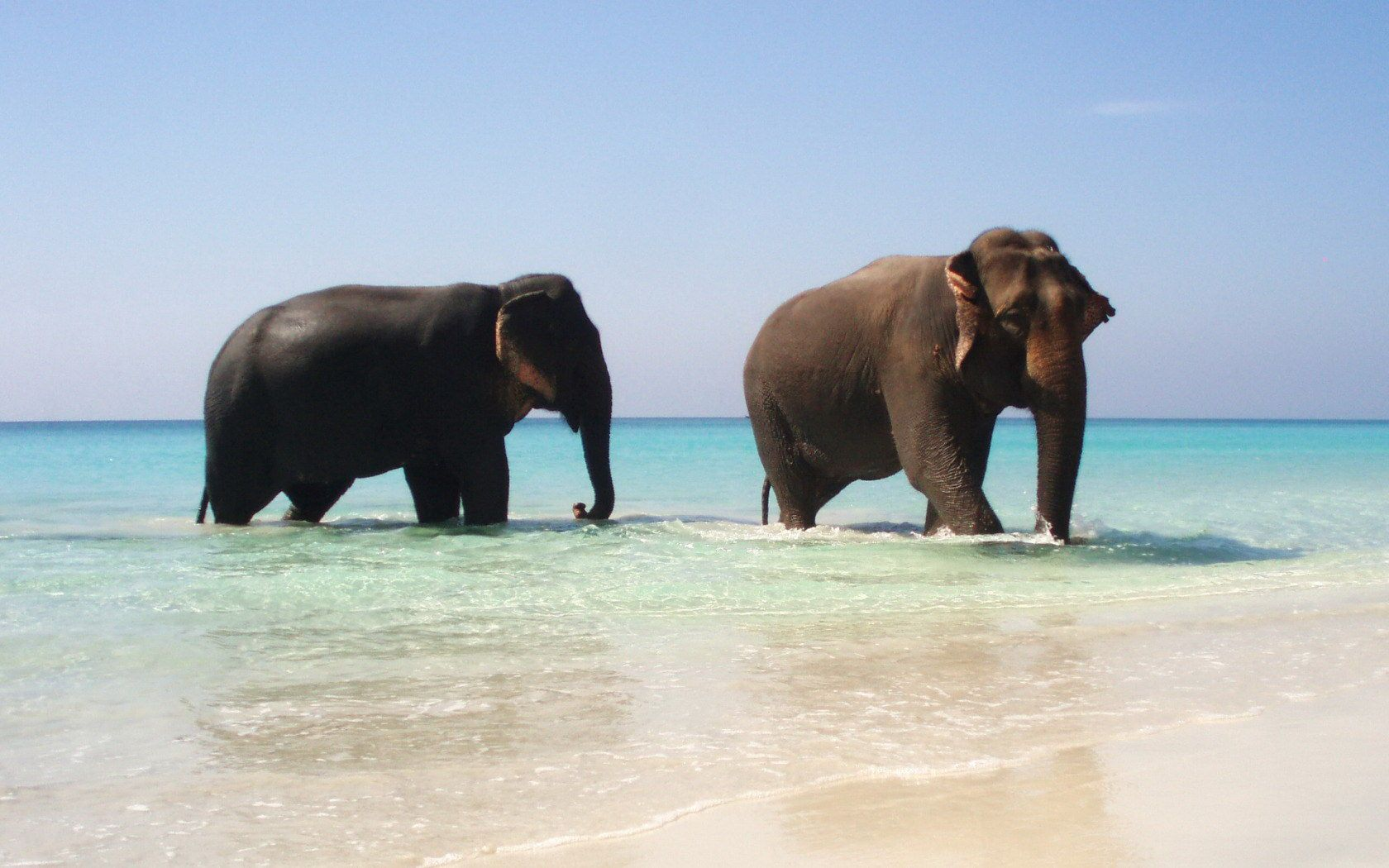 صورة لفيل Elefanten Tapete Elefanten Bilder Elefanten Hintergrund