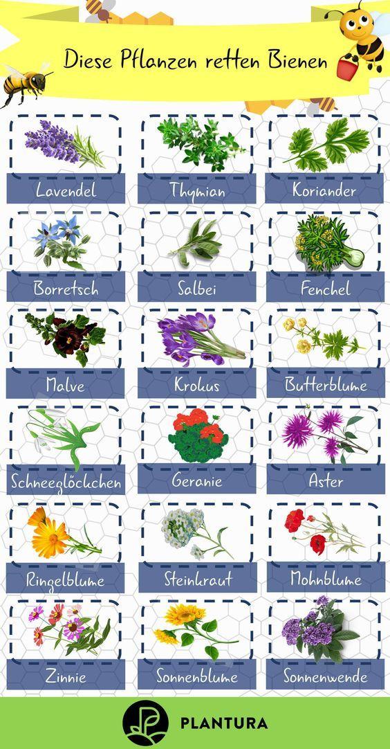 Top 10 der bienenfreundlichen Pflanzen (Übersicht) #pflegeleichtepflanzen