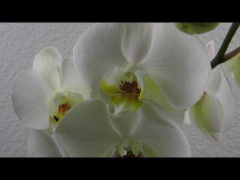 orchideen im glas deko ideen mit flora shop flora shop. Black Bedroom Furniture Sets. Home Design Ideas