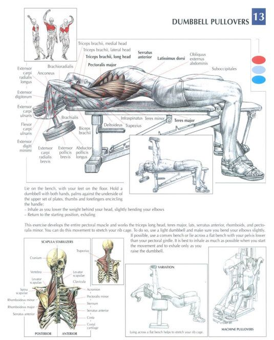 Lower Chest Exercises Chunk Fitness
