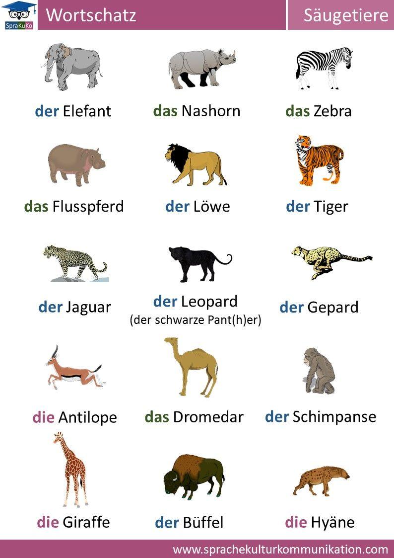 """Deutsch lernen Wortschatz """"Säugetiere"""" Deutsch lernen"""