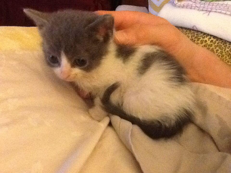 Teeny Kitten About 3 Weeks Old Fur Babies Kittens Animals