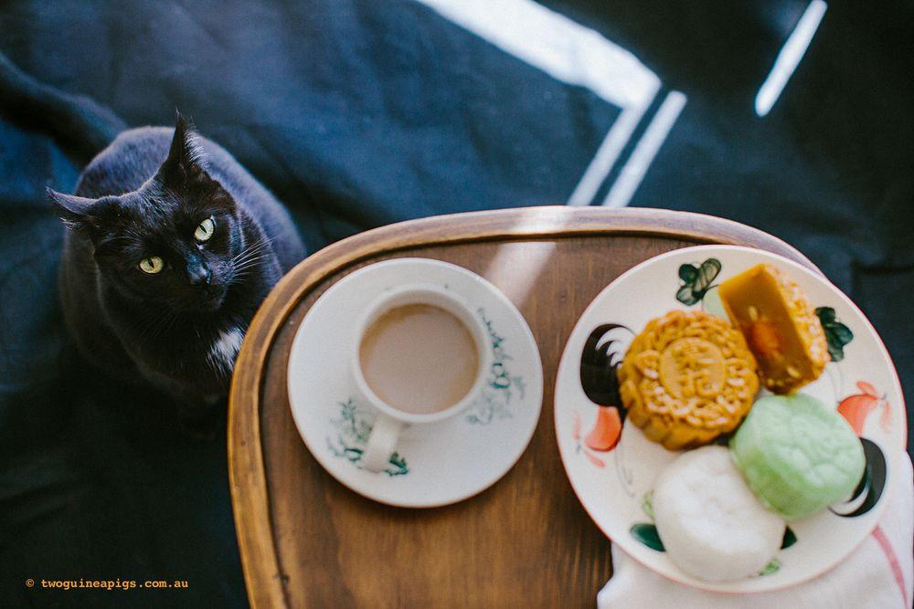 Happy mooncake festival sydney pet photographer