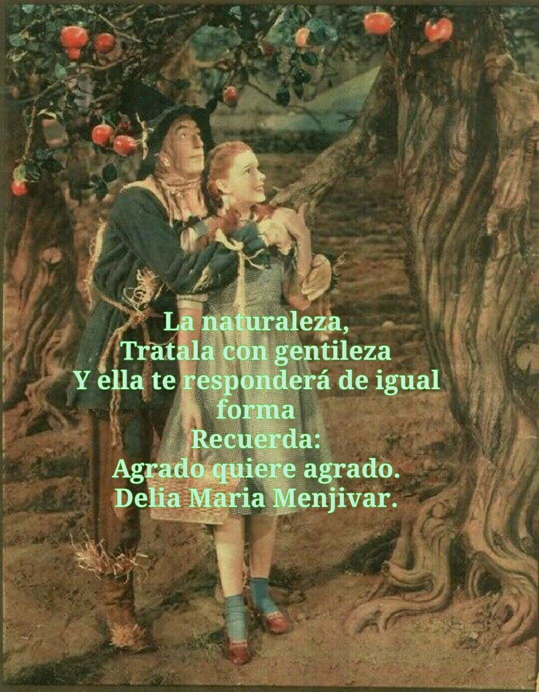 Pin By Delia Maria Menjivar On Dorothy Por Siempre