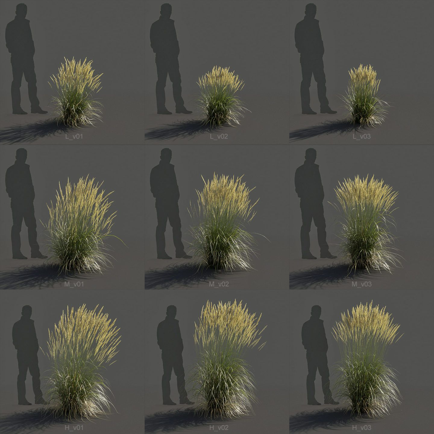Feather Reed Grass Karl Foerster Calamagrostis Acutiflora 3d
