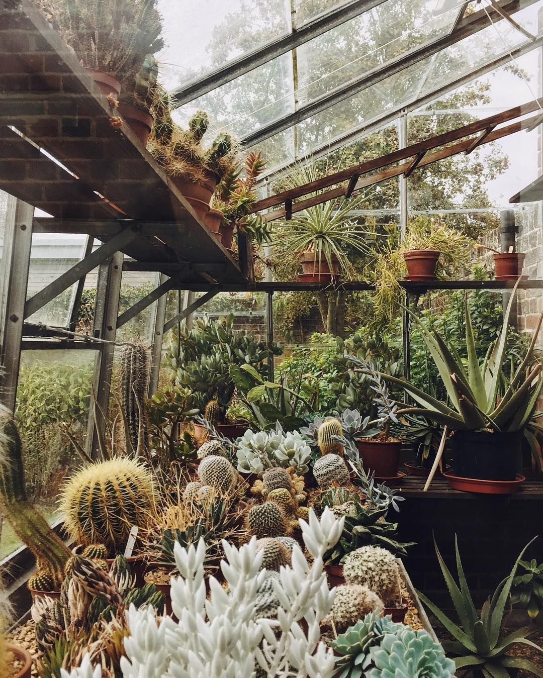 Today\'s goal: to find cactuses that can survive without a greenhouse ...