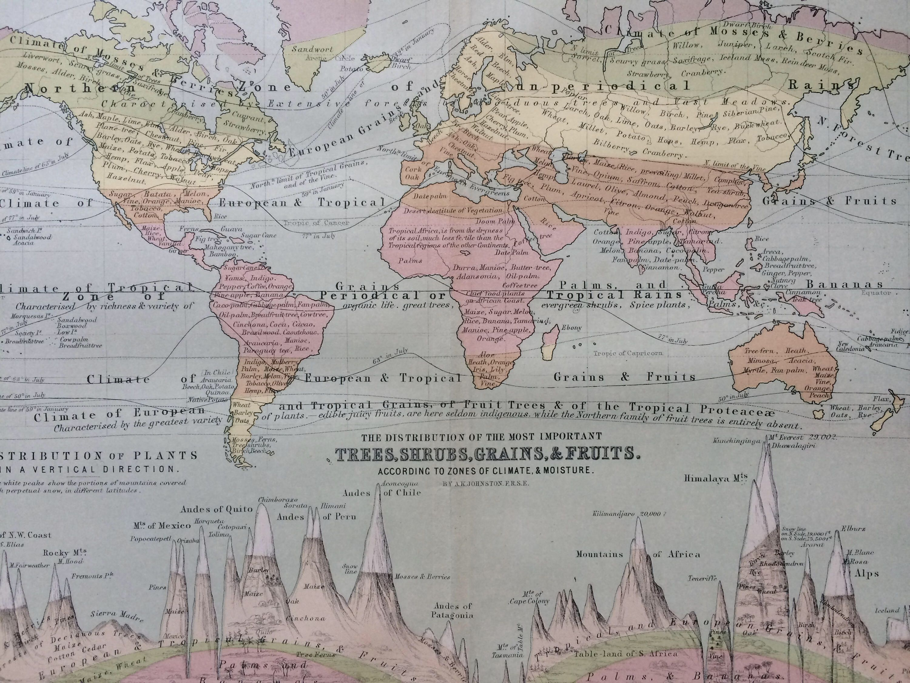 1873 original antique world map showing the distribution of the most 1873 original antique world map showing the distribution of the most important trees shrubs gumiabroncs Image collections