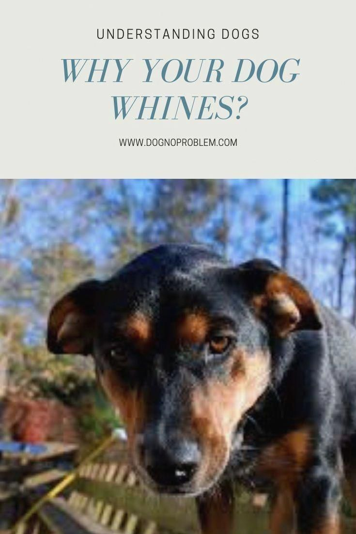 Dog Training Guide For Example A Loving And Calm Dog Will Most
