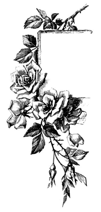 Http Img1 Liveinternet Ru Images Attach C 9 112 397 112397945 78846566 Large Roses037 Png Ink Illustrations Vintage Printables Vintage Ephemera