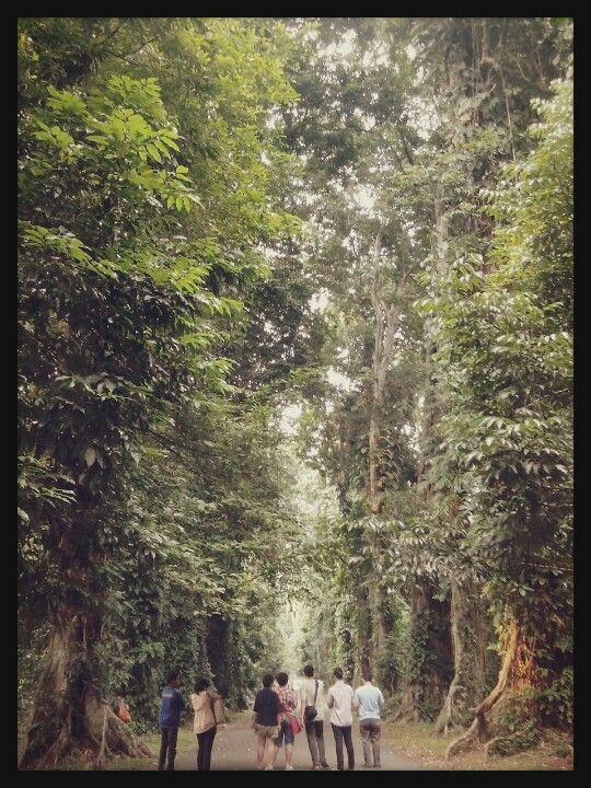 kebun raya (botanical garden), bogor, indonesia. Indonesia