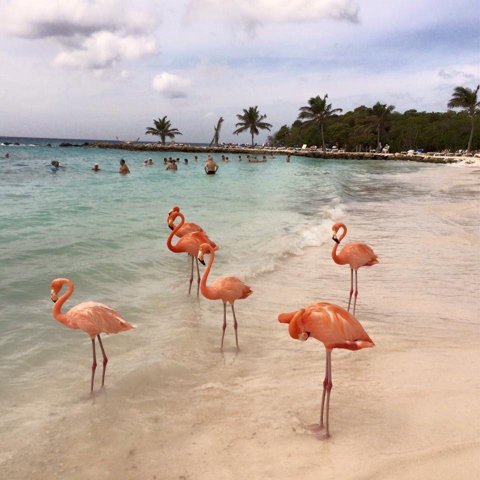 фламинго на джербе фото отзывы вентиляцию