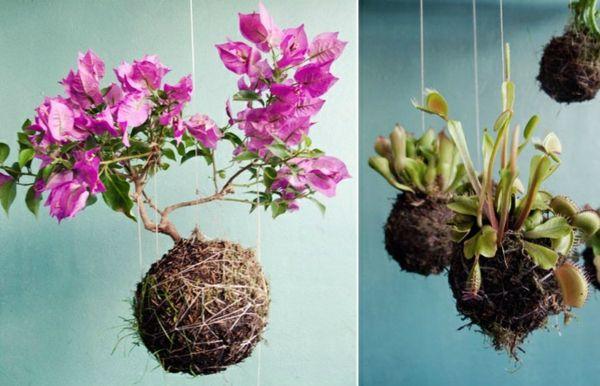 Coole Zimmerpflanzen coole blumentöpfe geflochten haus deko zimmerpflanzen orchideen