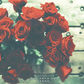 اجمل وردة عيد الحب 2016 احلى ورده في عيد الحب Flowers Rose Plants