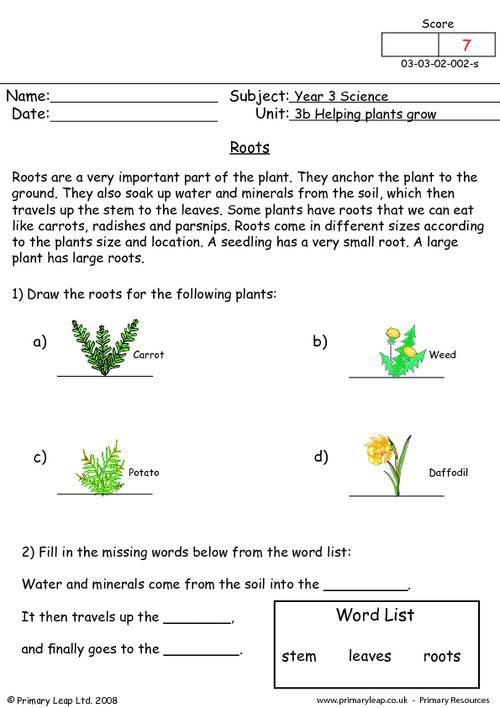 roots worksheet plants pinterest roots worksheets and primary resources. Black Bedroom Furniture Sets. Home Design Ideas